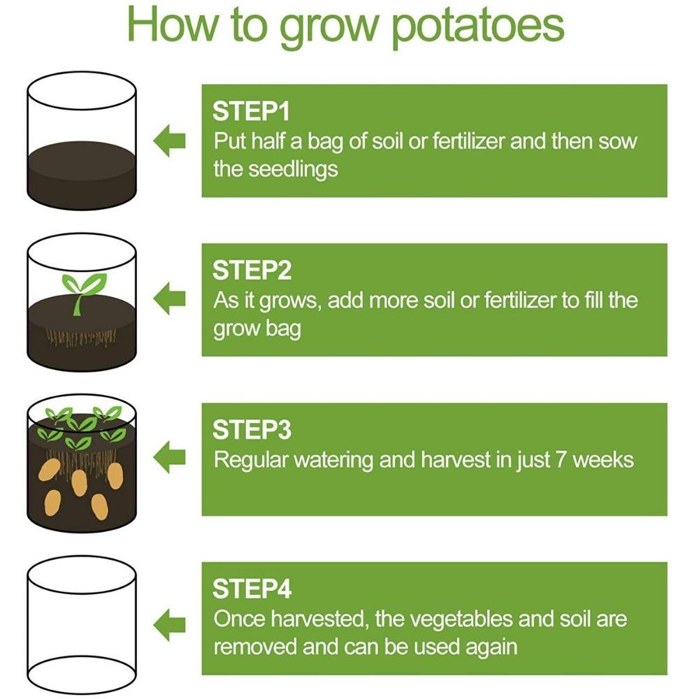 plant potato in grow bag